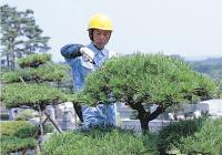 臨時植木剪定代行サービス
